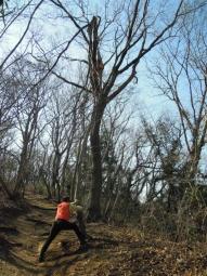 朽ちた木を伐採210222