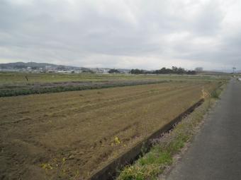 今日の畑210320