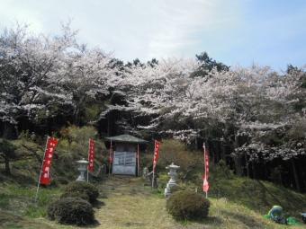 聖峰不動尊桜満開210327