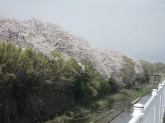 花水川横の川210331