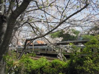 大磯駅と桜210331