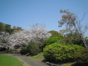 高田公園210331
