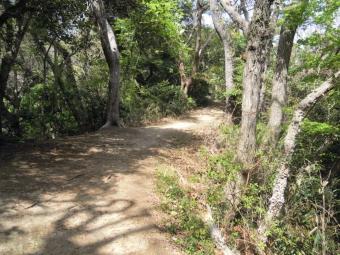 ちょっとした稜線歩き210331