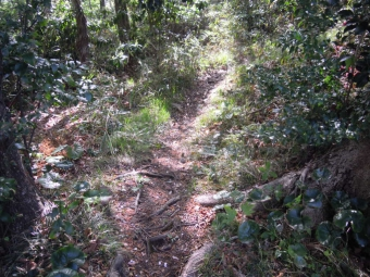 途中から山道にほんの短い距離だけど210331