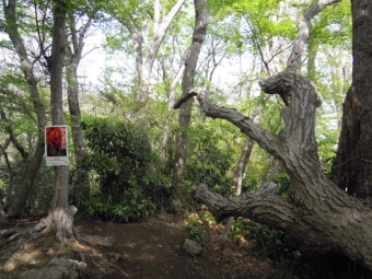 此処に出て来た 記憶ある特徴ある木210331