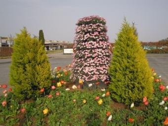 花菜ガーデンの入口210331
