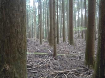 林の中をしばらく進んで210404