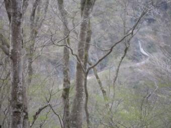丹沢湖に向かう林道が見えて210404