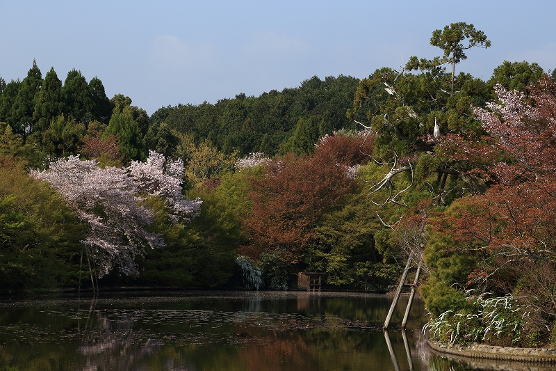 IMG_0215 龍安寺 池 5400K 風景