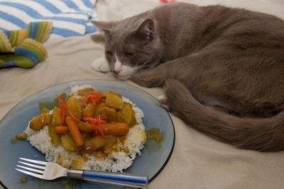 nukocurry_2020052009551716f.jpg