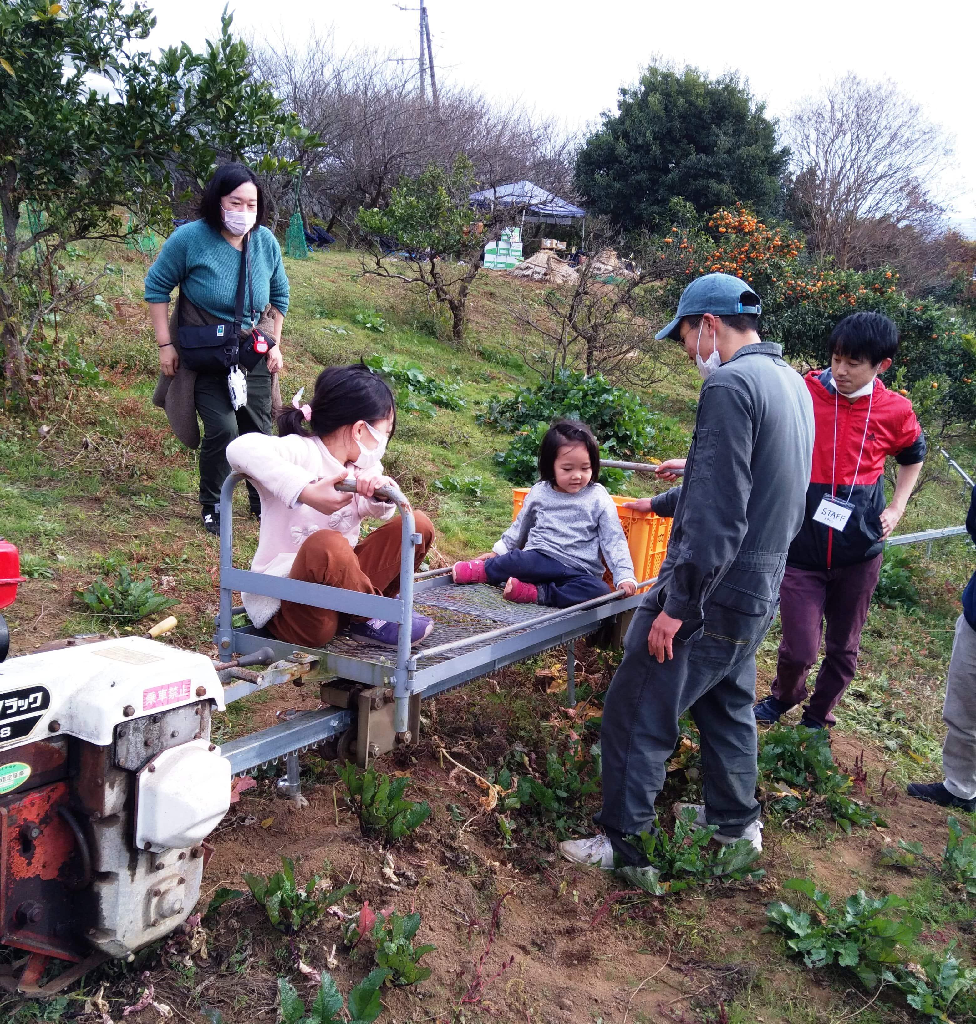松田町みかん山イベント報告05