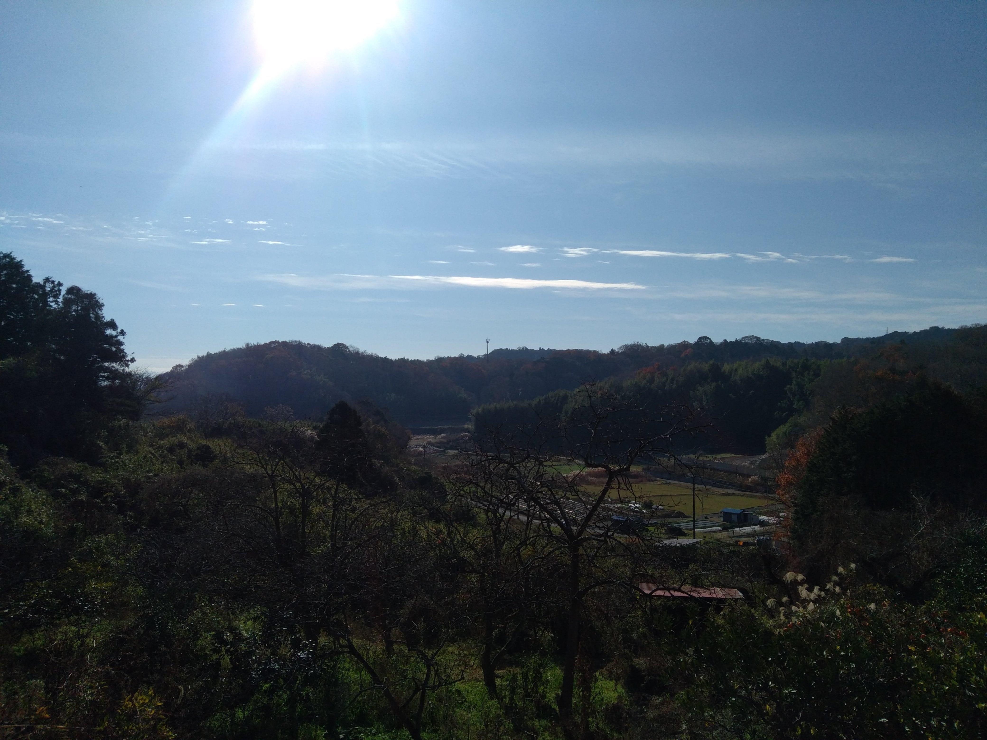 松田町みかん山イベント報告12