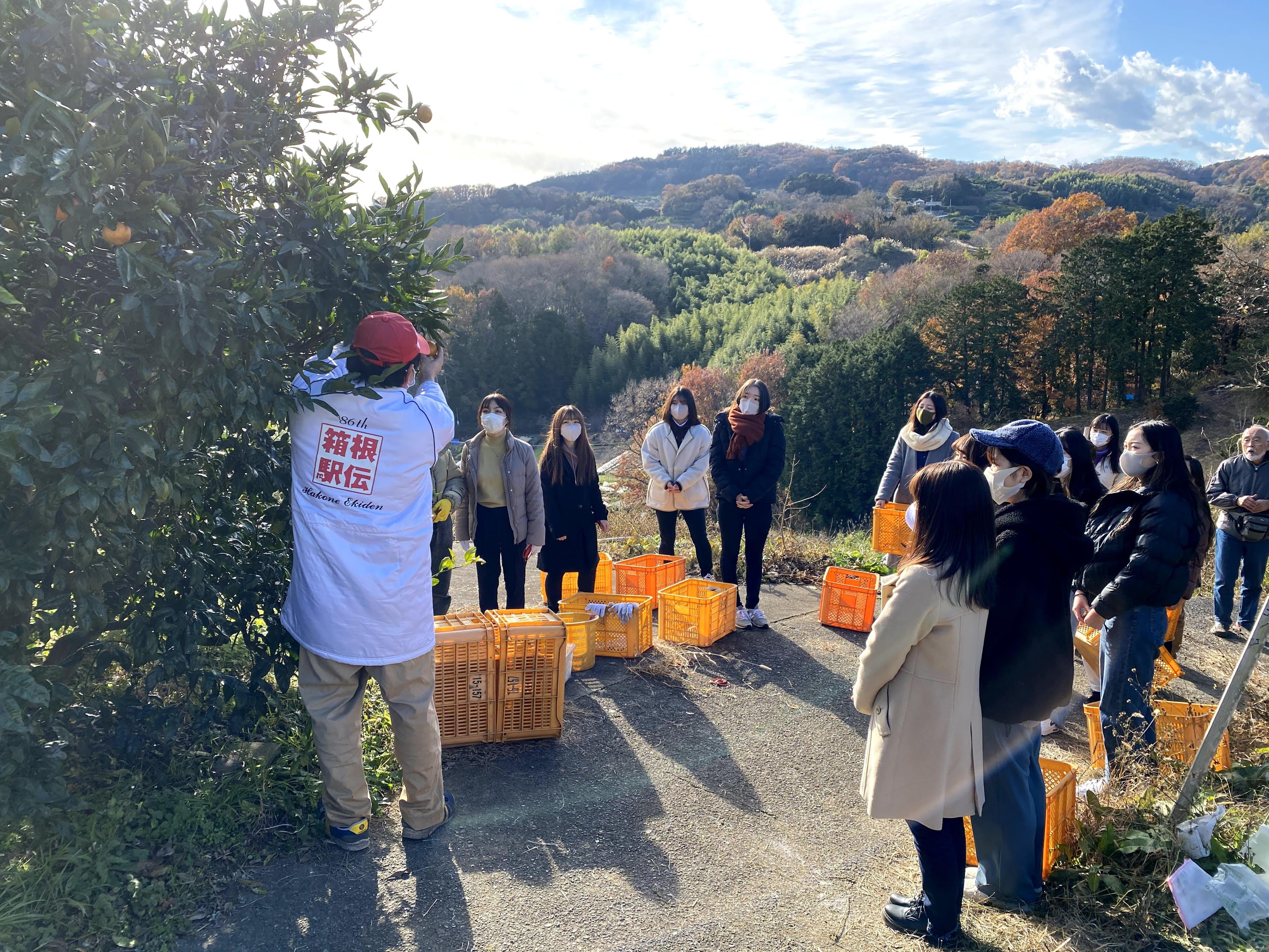 松田町みかん山イベント報告13