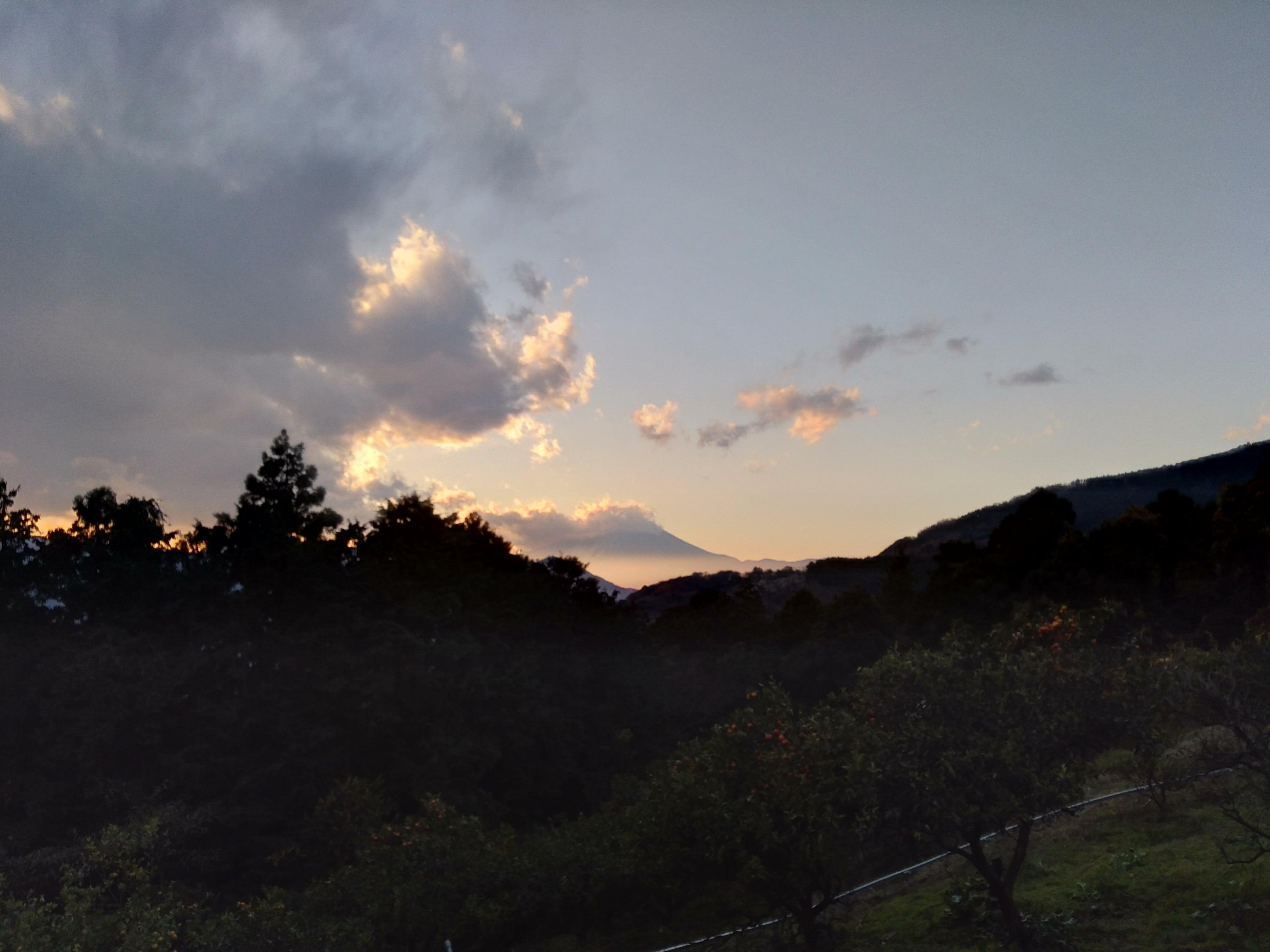 松田町みかん山イベント報告18