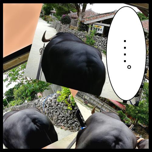 石垣島旅行1日目その4072602