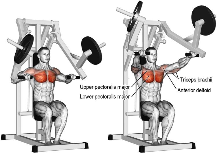machine-chest-press-exercise.jpg