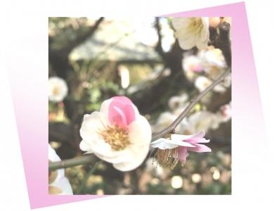 20210302梅の花A