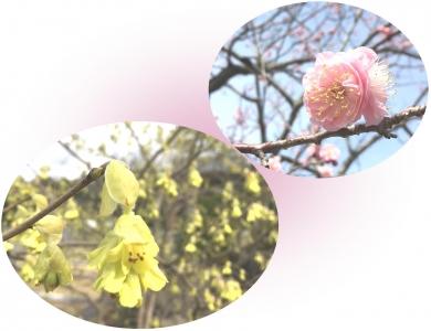 20210309春の花A
