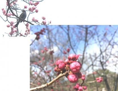 20210309春の花B