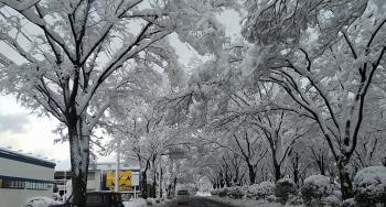 米子市内 年越し寒波 2020-2021