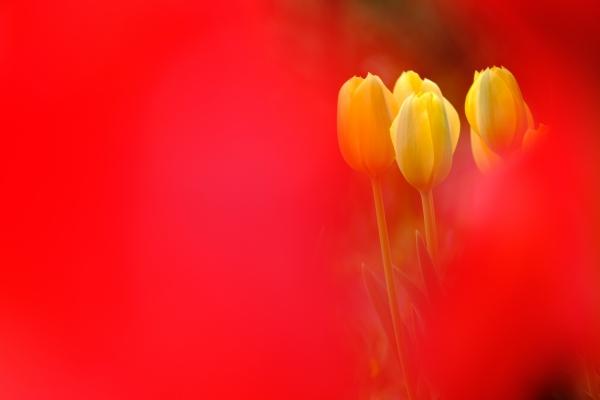 陽春の輝き