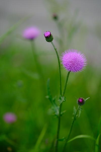 草原の香り