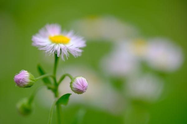 過ぎ行く春の思い出