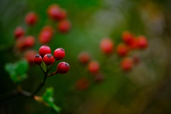 晩秋の贈り物