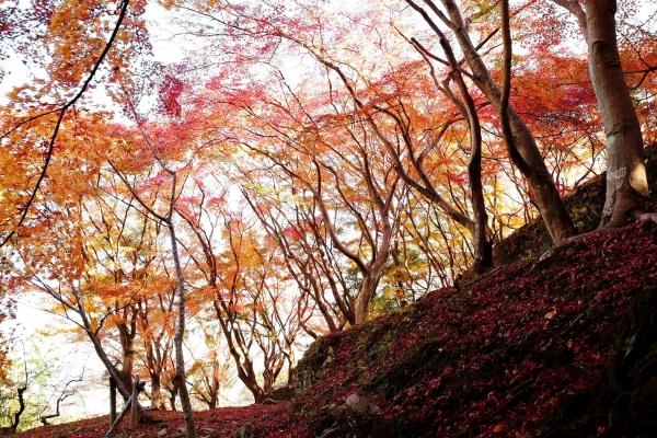 深まりゆく秋