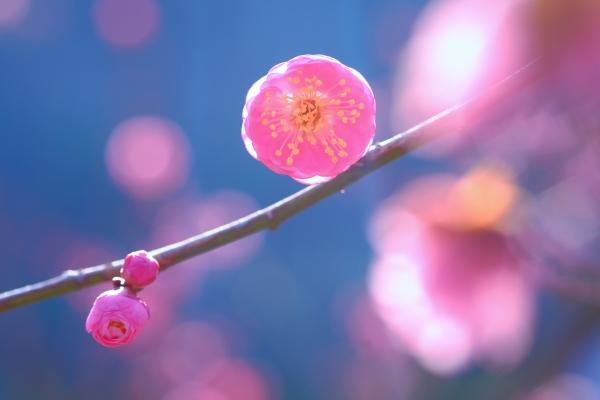 春の絵手紙