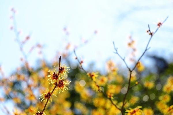 里山に春を呼ぶ
