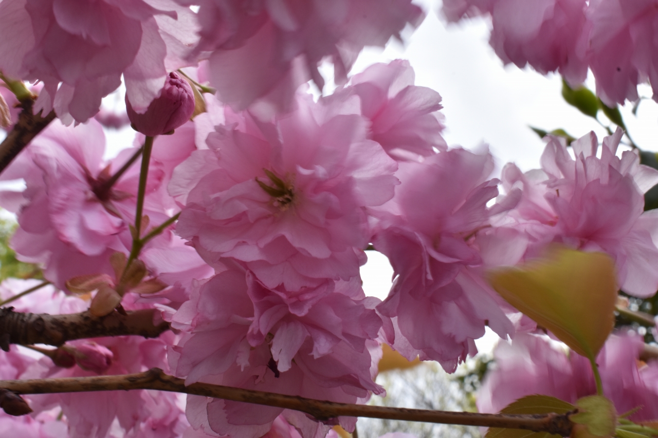 令和2年4月お花