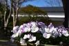 令和3年2月のお花
