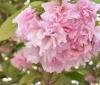 令和3年4月の花