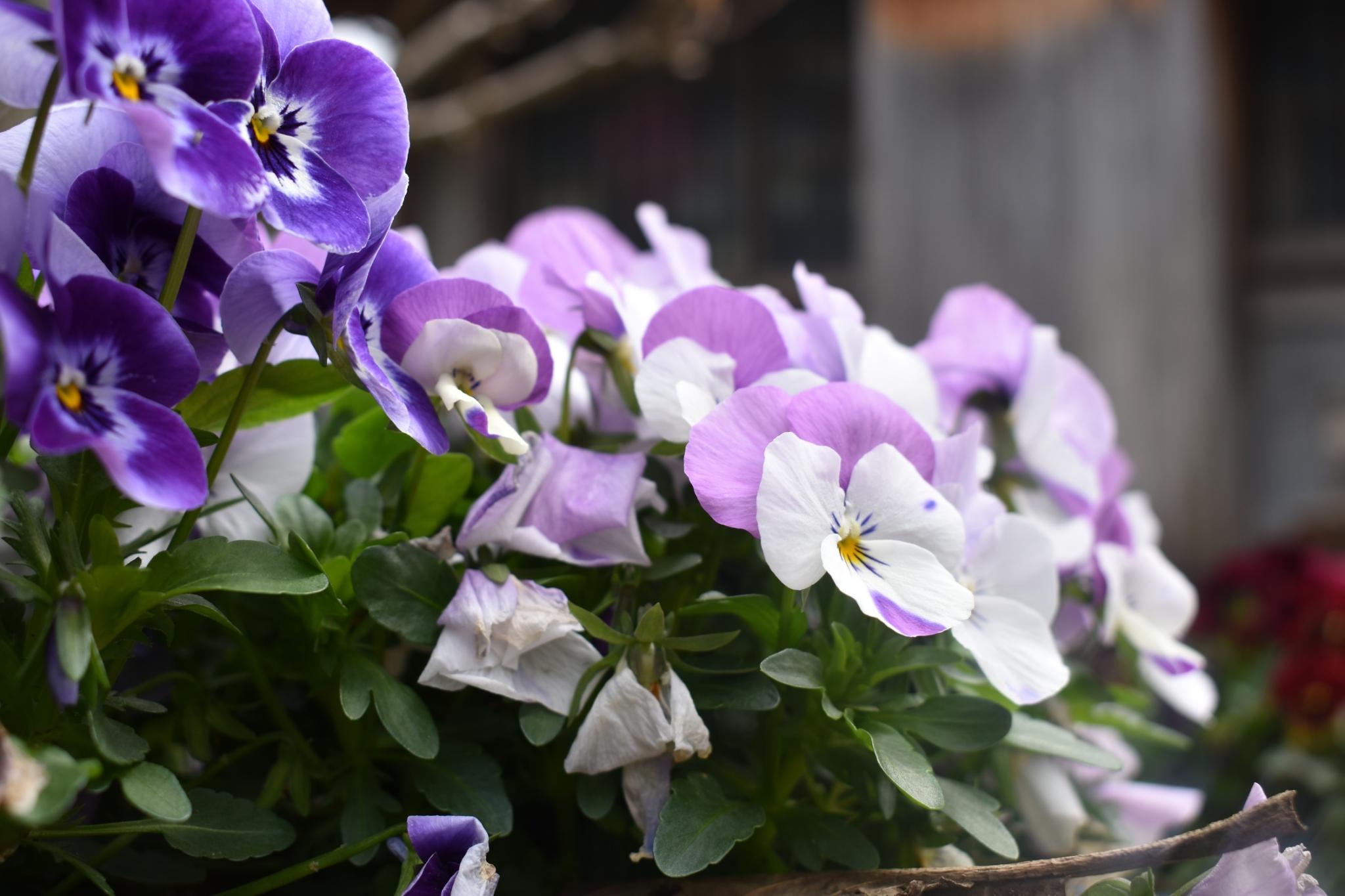 令和3年3月のお花