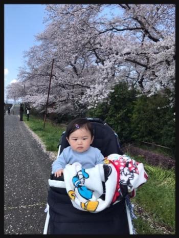 sakura_convert_20200407232822.jpg