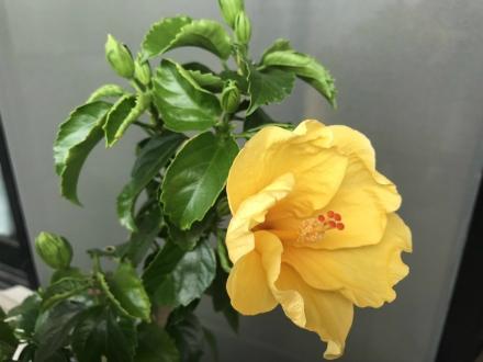 200811flower (1)
