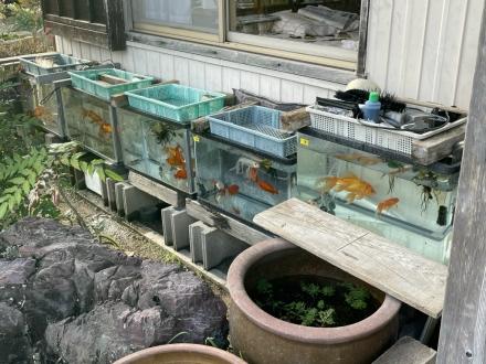 201227Goldfish (1)