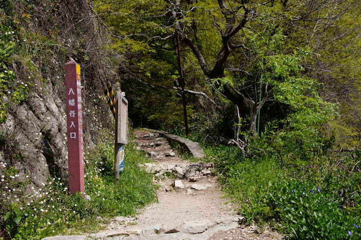 210411八幡谷ハイキング1