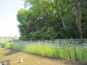 2020/4/29境川遊水地ポケットパーク