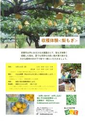 20200816梨もぎチラシ