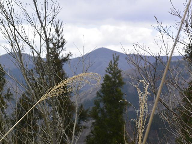 200411-025.jpg