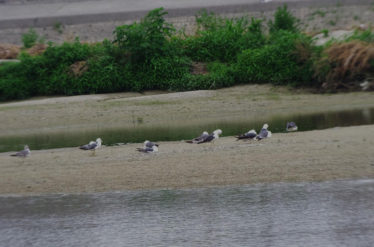 200606大和川