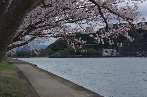 2桜200331