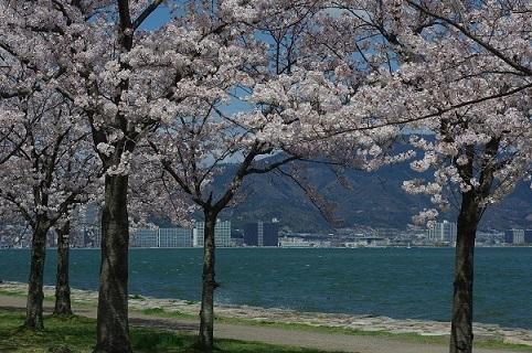 桜200405