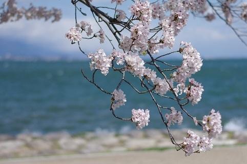 1桜200305