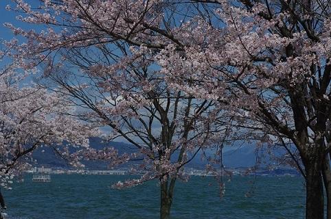 3桜200405