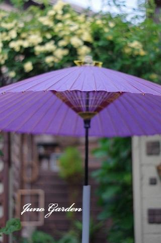 和傘200506