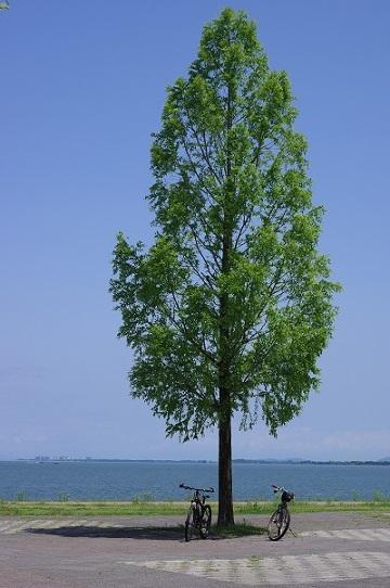 湖岸200629