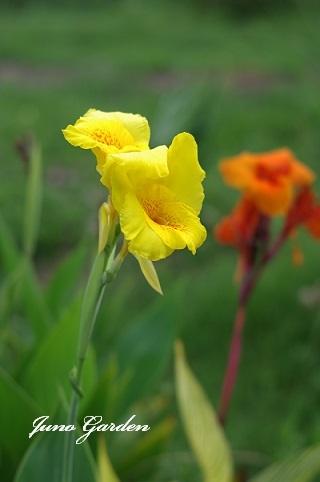 黄かんな200809